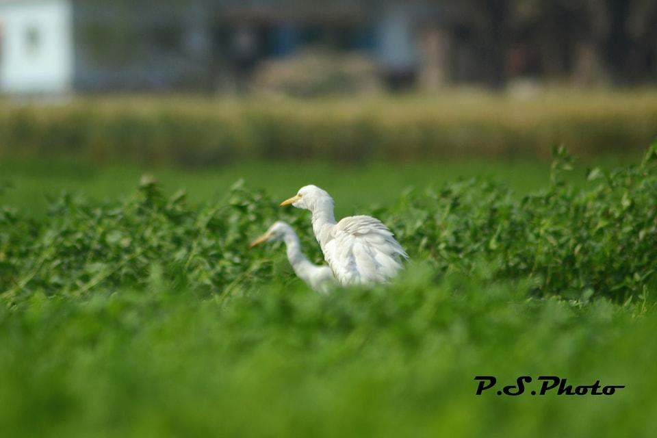 prabhakar singh's Photo 6