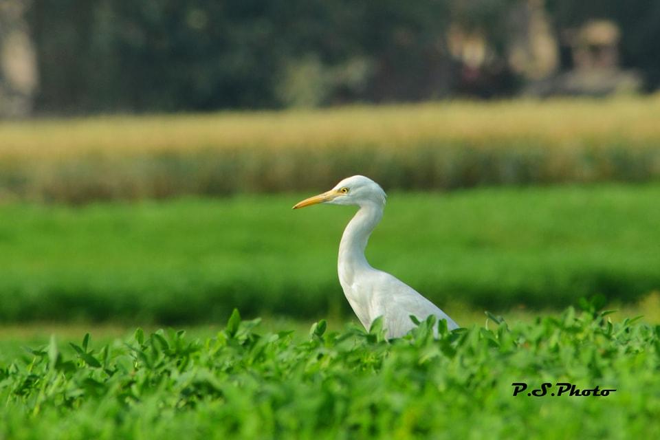 prabhakar singh's Photo 7