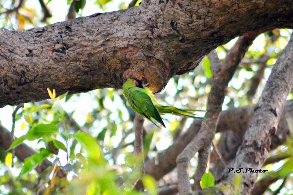 prabhakar singh's Photo 8