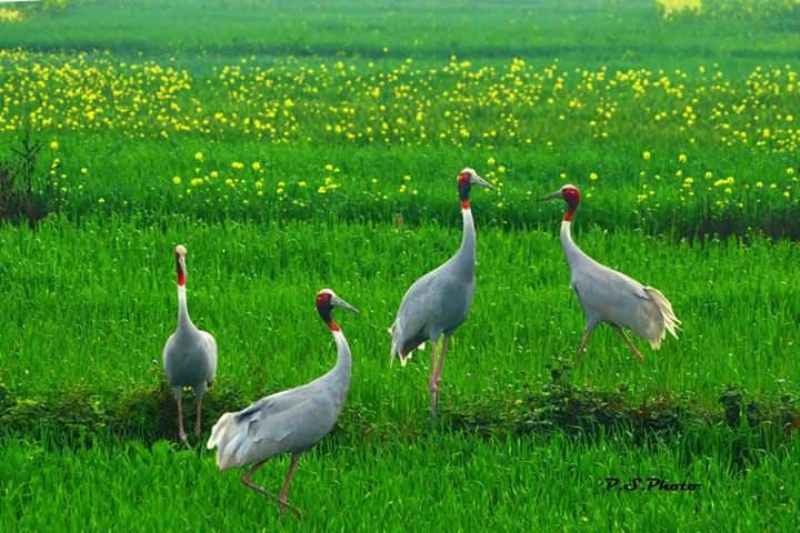 prabhakar singh's Photo