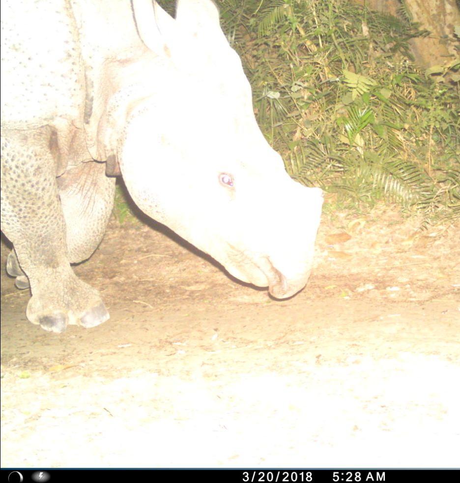 rhino_sohgibarwan 3
