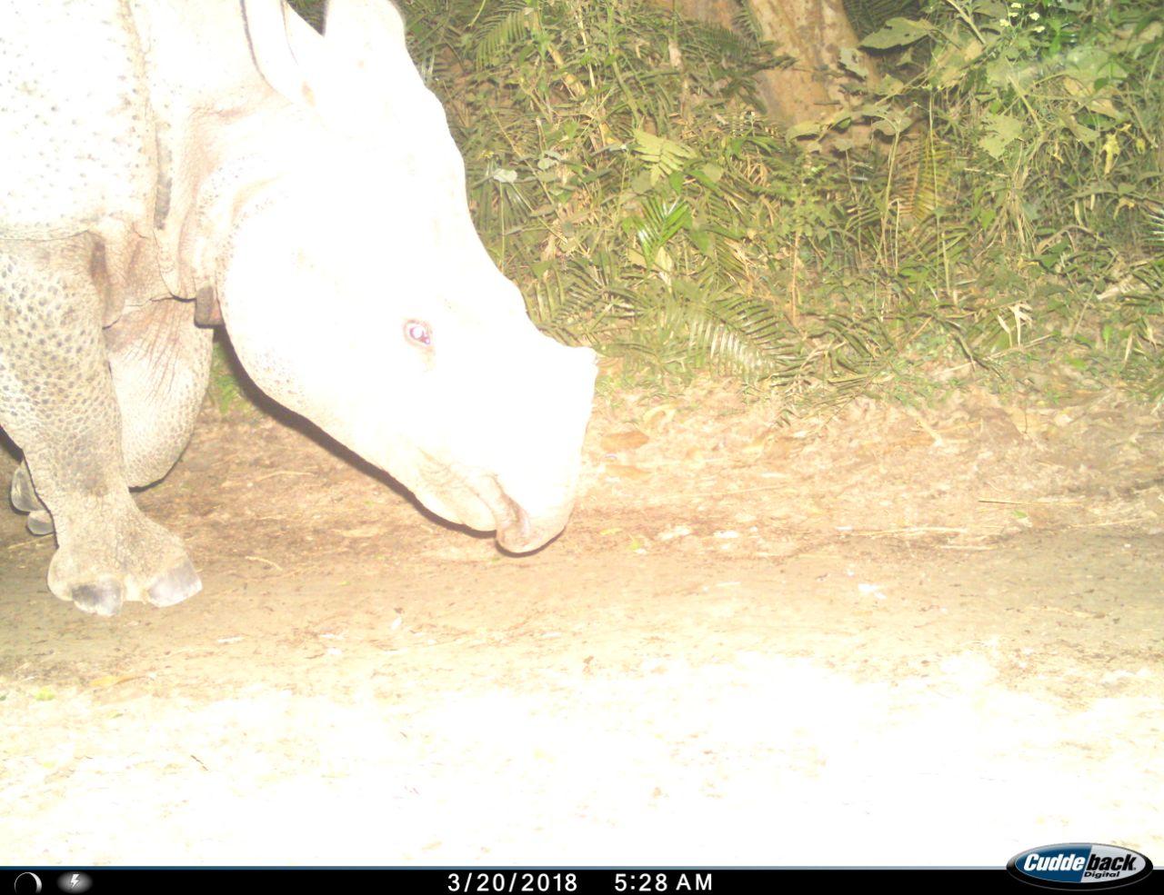 rhino_sohgibarwan